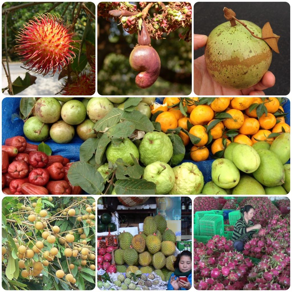 fruits asiatiques au Vietnam