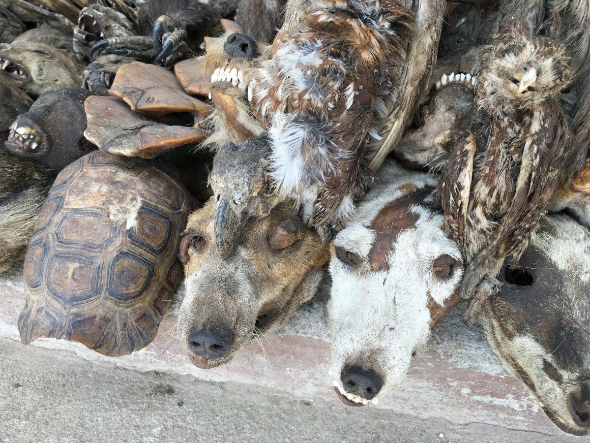 Le marché aux fétiches d'Akodésséwa, haut lieu vaudou