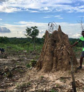 Termites au Togo