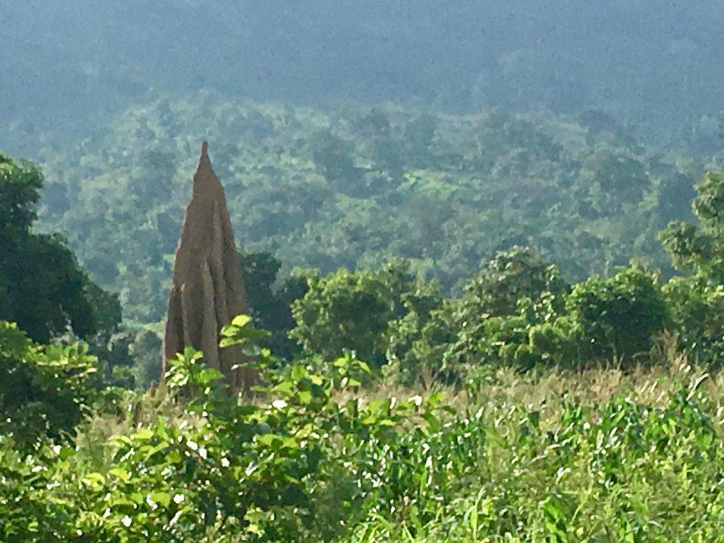 termitière